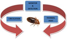 Thermal (Heat) Treatments for Bedbugs
