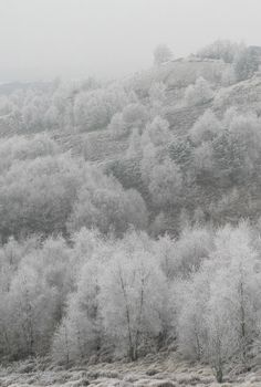 Frost covered trees, Staffordshire, England