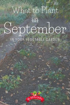 Not Sure What To Plant In September In Your Vegetable Garden? From Salad Greens To Root Vegetables, September Brings In The Fall Garden Favorites Fall Garden Salad Garden Fall Vegetables Via Cpjsouthern Kinds Of Vegetables, Winter Vegetables, Container Gardening Vegetables, Root Vegetables, Growing Vegetables, Vegetable Gardening, Veggie Gardens, Growing Tomatoes, Garden Container