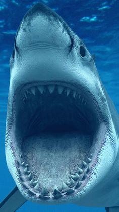 Can you check it? Great White Shark :Photo by Denis Scott Underwater Creatures, Underwater Life, Ocean Creatures, Wild Animal Wallpaper, Beach Wallpaper, Wallpapers Android, Wallpaper Wallpapers, Mobile Wallpaper, Animal Original