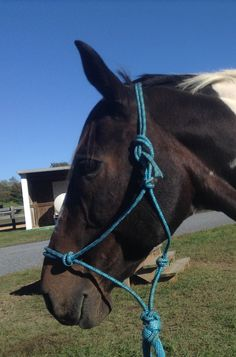 My horse, Cookie