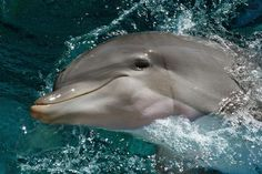 Why Whales and Dolphins Deserve More Rights http://www.onegreenplanet.org/news/why-whales-and-dolphins-deserve-more-rights/