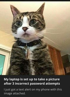 Incorrect password ... #cattruths