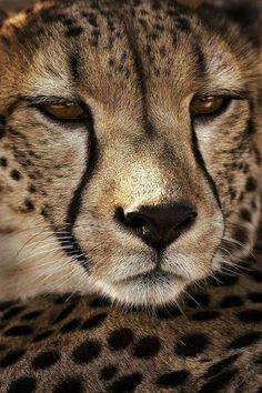 Run like a cheetah.