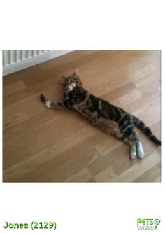 Please help us find Jones the Cat missing in the N19 area. For more details click http://j.mp/1u2iq2J
