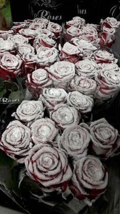 "Rose ""zuccherose"""