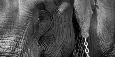 petition: Fodor's: Stop Promoting Elephant Cruelty
