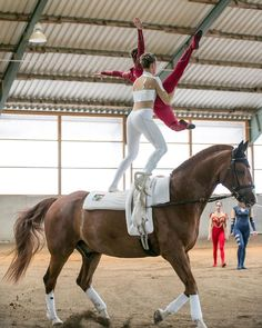 Vaulting, Training, Horses, Instagram, Animals, Animales, Animaux, Work Outs, Animal