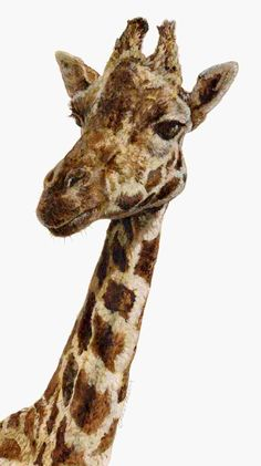Giraffes are so beautiful. I got to feed one at the zoo once! Giraffe Images, Giraffe Pictures, Animal Pictures, Giraffe Painting, Giraffe Art, Beautiful Creatures, Animals Beautiful, Spiritual Animal, Animals Of The World