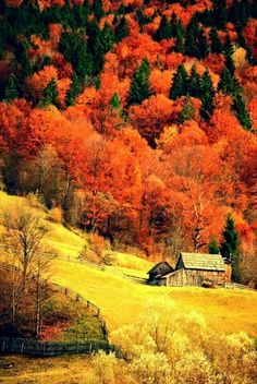 The post (notitle) autumn scenery appeared first on Trendy. Fall Pictures, Nature Pictures, Beautiful World, Beautiful Places, Beautiful Beautiful, Autumn Scenes, Photos Voyages, Amazing Nature, Beautiful Landscapes