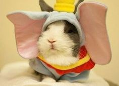 Guinea+pigs+dressed+up | Guinea pig dressed up as Dumbo. LOL | guinea pigs