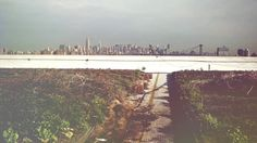 Five Borough Farm: How Can We Expand Urban Agriculture in NYC?