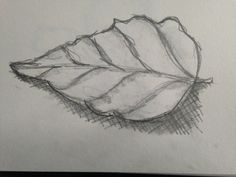 A pencil line drawing using the crosshatching method to shade.