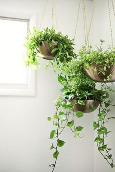 Easy Hanging Planter DIY | A great way to display flowers and plants in a home is to hang them from the ceiling.