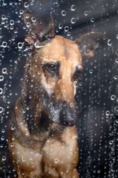 Grey, rainy day.  Wonderful photo by the celebrated German photographer, Elke Vogelsang.