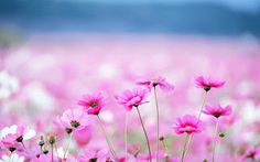 Povestea florilor