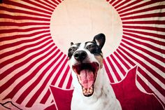 Pet Portraits by Photographer Susan Sabo - Dog Milk