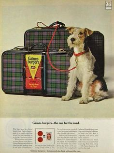 VINTAGE WIRE FOX TERRIER ADS -