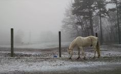 Made it up Walden's Ridge to see my little pony in the fog and a light dusting of snow. Natural Horsemanship, My Art Studio, My Little Pony, My Arts, Snow, Horses, Nature, Instagram Posts, Outdoor