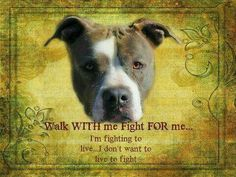 I will always walk with you and always fight for you I am Pitbull lover this is my breed once you go pit you won't never quit Walk with me, Fight for me. I'm fighting to live.I don't want to live to fight. Pit Bulls & Parolees, Pitbull Facts, Pitbull Pictures, Stop Animal Cruelty, Dog Fighting, Pit Bull Love, Mans Best Friend, Dog Toys, Best Dogs