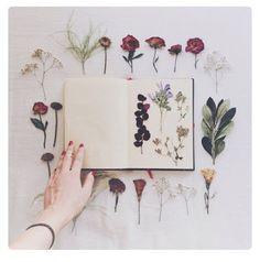 JOTTE: herbarium maken