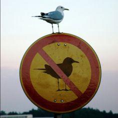 """""""Obey little; resist much""""--Walt Whitman"""