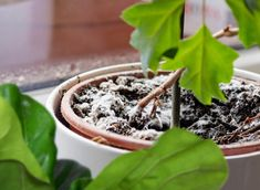 A Guide to Fungus and Houseplants   WallyGro - WallyGro Succulent Soil, Succulents, Indoor Garden, Indoor Plants, Container Gardening, Gardening Tips, Dumb Cane Plant, Growing Mushrooms, Soil Layers
