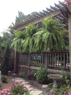 Macho Boston Ferns A Great Idea For Open Porches Outdoors Porch Plants Hanging Plants