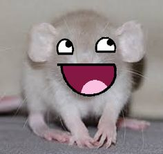 awesome Face Rats