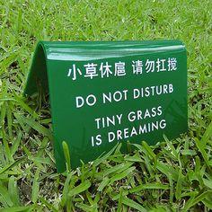 Chinglish Translation - Tiny Grass is Dreaming