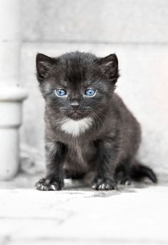 such a cute kitty. from Cute Overload