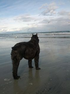 """""""I can only hope to be this brave and fearless when my time comes."""" #Tripawd"""