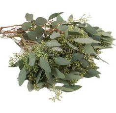 Seeded Eucalyptus: Primarily for bouquets and boutonnières. Can be paired with hydrangeas for table arrangements.