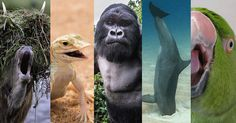 12 Drunks of the Animal Kingdom 12 Drunks of the Animal Kingdomhttp://ift.tt/1U68CC6 A variety of animal species that have found natural sources for alcohol.