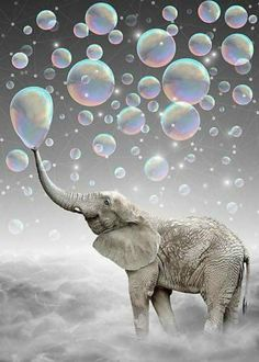 Elephant Blowing Bubbles