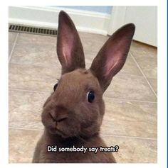Bunny, Funny Bunnies, Birds, Cute Creatures, Rabbit, Cute Animals, Beautiful, Frases, Pretty Animals