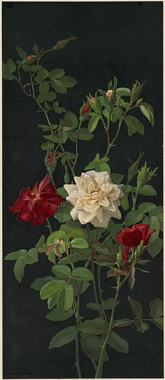 Roses and Buds by Boston Public Library on Flickr.  Roses and Buds by George Cochran Lambdin. ( 1830- 1896).