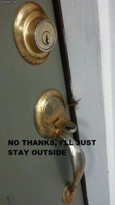 spider funny pictures