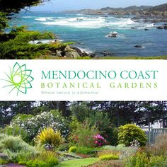 Mendocino Coast Botanical Gardens (Emailed 3.2 about Meadow Lawn, Ocean Bluff, Cliff House, and/or Orchard Garden. Available.)