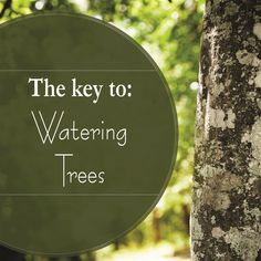 Water is vital for the success of our trees. Too much or too little can be an issue. In this  podcast find out how, when and how much to water your trees, and when you don't need to bother. You'll also learn how to test your sprinkler system in order to run it the appropriate length of time. For more information head over to tfsweb.tamu.edu !