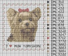 Yorkshire-with-noeud.JPG