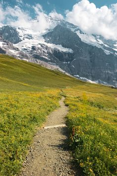 The Jungfrau region is filled with beautiful panoramic hiking trails such as this one from Kleine Scheidegg. Make sure to set aside ample time in your itinerary to take strolls and hikes around Jungfrau! Europe Travel Tips, European Travel, Travel Guides, Travel Destinations, Bergen, Swiss Travel Pass, Voyage Europe, Swiss Alps, Fauna