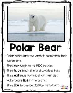 POLAR BEARS - Nonfiction Reading and Writing for Primary Students - Kindergarten and First Grade - Non-Fiction resources to teach animal reports and animal crafts - complete curriculum FREE activities and printables - graphic organizers Bears Preschool, Preschool Winter, Winter Craft, Artic Animals, Penguins And Polar Bears, Nonfiction, Informational Writing, First Grade Writing, Kindergarten Science