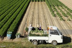 Farmers load freshly harvested Daikon radishes onto a truck at a field in Tatsuno, Hyogo Prefecture, Japan, on Wednesday, Nov. 2, 2016. Unusually poor weather in western Japan and a rise in food prices, particularly for vegetables, in September suggest risk of a downside surprise in Japan's household spending. Photographer: Buddhika Weerasinghe/Bloomberg via Getty Images Nov 2, September, Japanese Farmer, Hyogo, Farmers, Wednesday, Westerns, Harvest, Monster Trucks