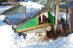 a chicken solarium.  clever.  not that we get than kind of snow, but it would be a toasty spot in the winter months.  Might try that with a trip to habitat home store.