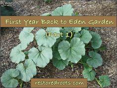 First Year Back to Eden Garden (Part 1)