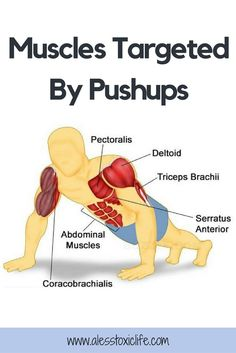 """It is a misconception that a pushup only works your upper body. The """"perfect pushup"""" is actually a total body movement. Push Up Muscles, Build Arm Muscle, Perfect Pushup, Heavy Weight Lifting, Lift Heavy, Push Up Workout, At Home Workouts, Workout Routines, Toning Workouts"""
