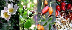 PLANTAR ÁRBOLES y arbustos: Tipos de frutos y semillas AUTÓCTONOS España