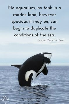 The life of a captive orca or dolphin is no life at all.