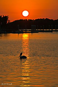 sunset everglade city